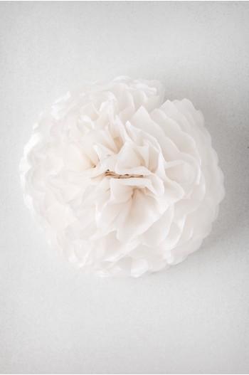 Pompon Blanc Lauzon